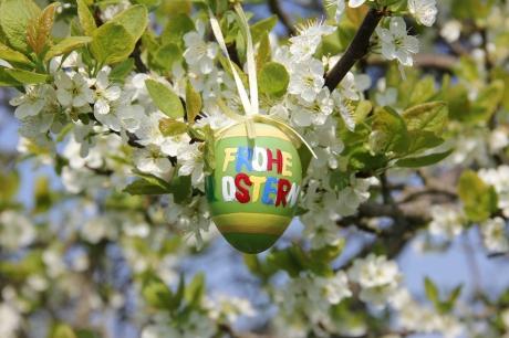 Zu Ostern blüht uns was im Alten Land...